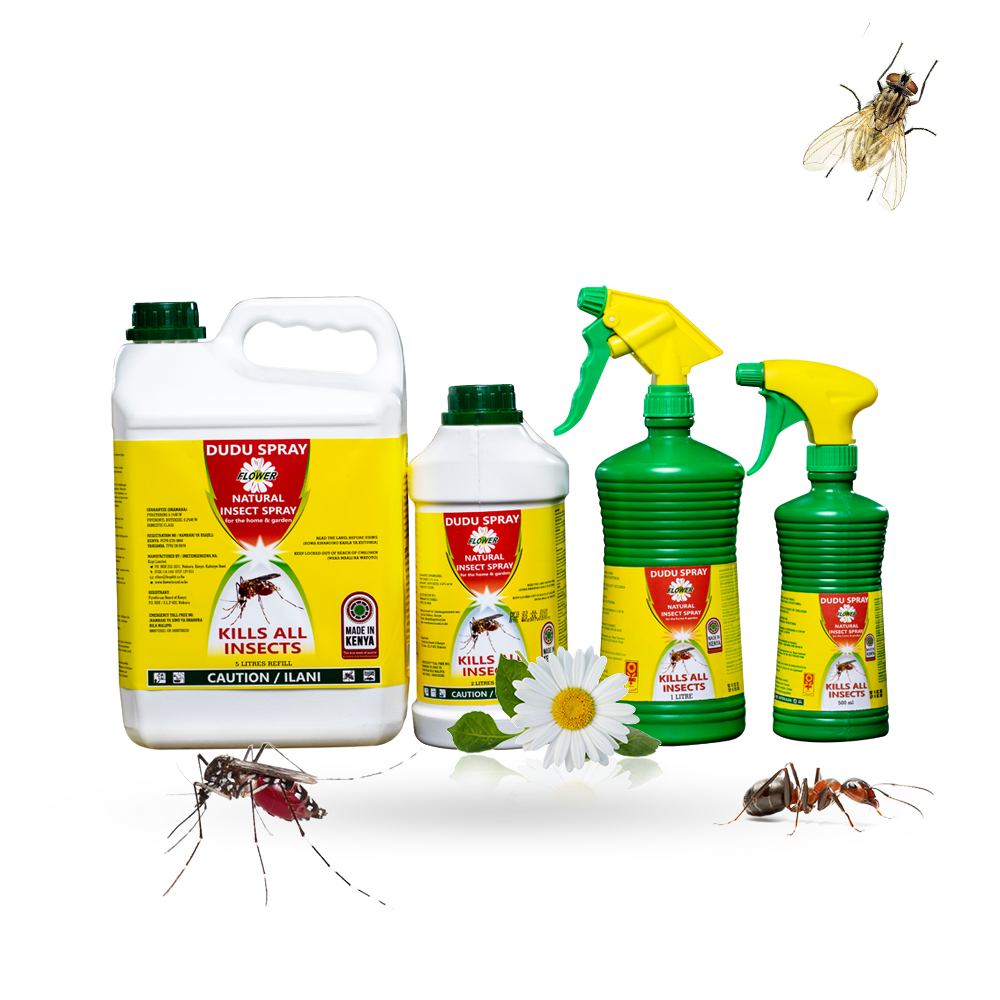 Natural pyrethrum insect spray